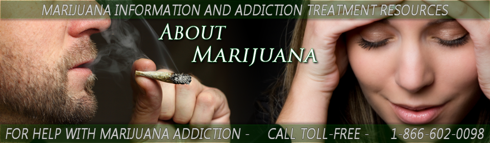 Marijuana Effects | The Effects of Marijuana